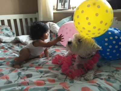 Morning birthday greeting from a hula wearing westie and baby girl - it's going to be a good day!